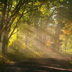 Sunshine-fog-trees-1_-_West_Virginia_-_ForestWander