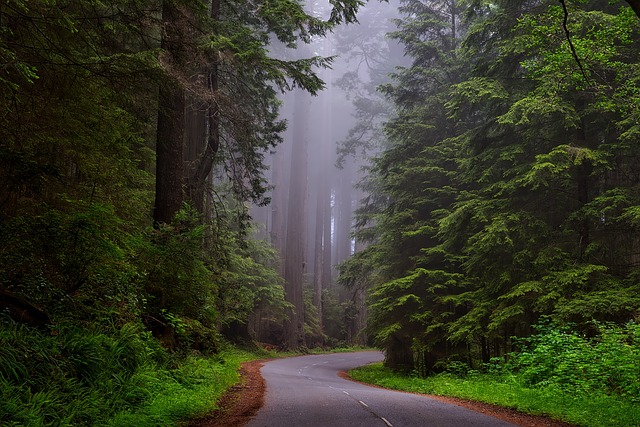redwood-national-park-1587301_640