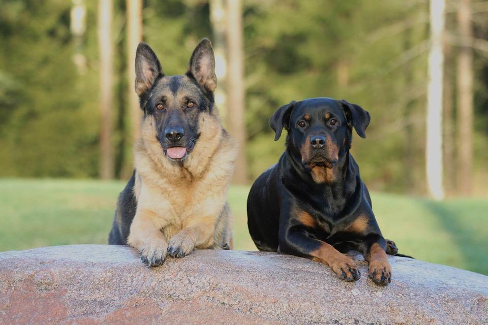 dog-330136_960_720